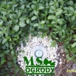 Oświetlenie w ogrodzie - MS Ogrody Łódź